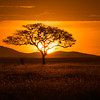 The classic sunset scene from Africa.