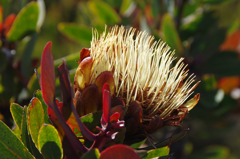 Lush vegetation at Millenium Camp