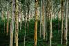 Boranup Forest, Margaret River Western Australia
