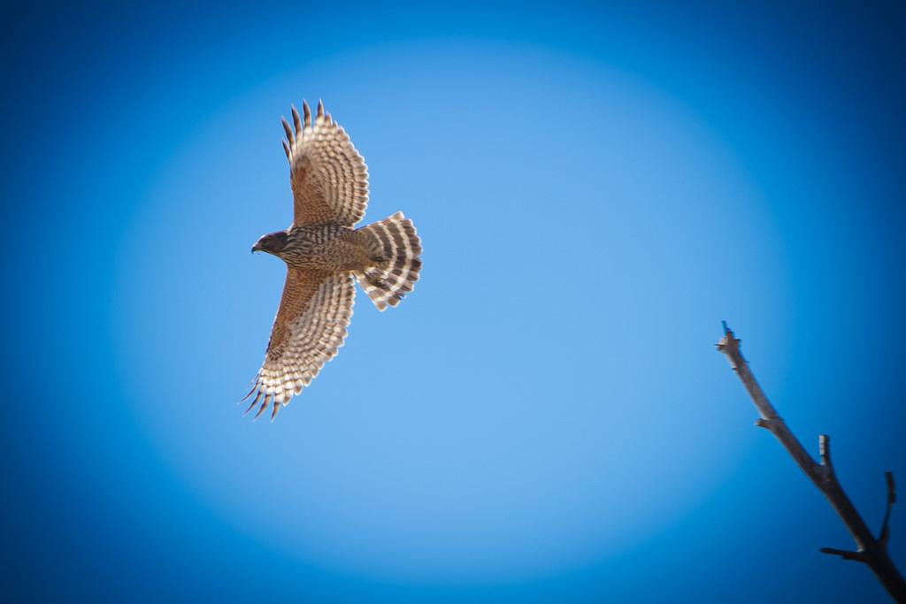 IMAGE: http://www.brad21photo.com/Landscapes/Taylor-Creek-2013/i-WxvKtzv/1/XL/taylorcreek2013-4626-XL.jpg