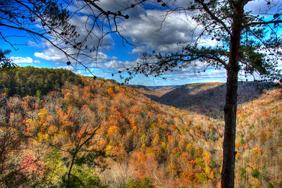 Collins Gulf Overlook in the Savage Gulf State Natural Area in Tennessee