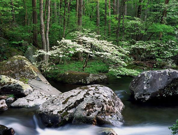 Dogwood Spring Treemont