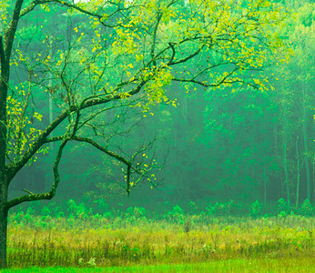 Cades Cove morning (1 of 1)