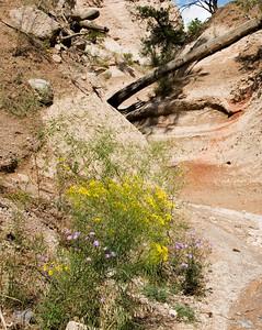 Tent Rocks 2009 2 Slot Canyons & Desert Plants