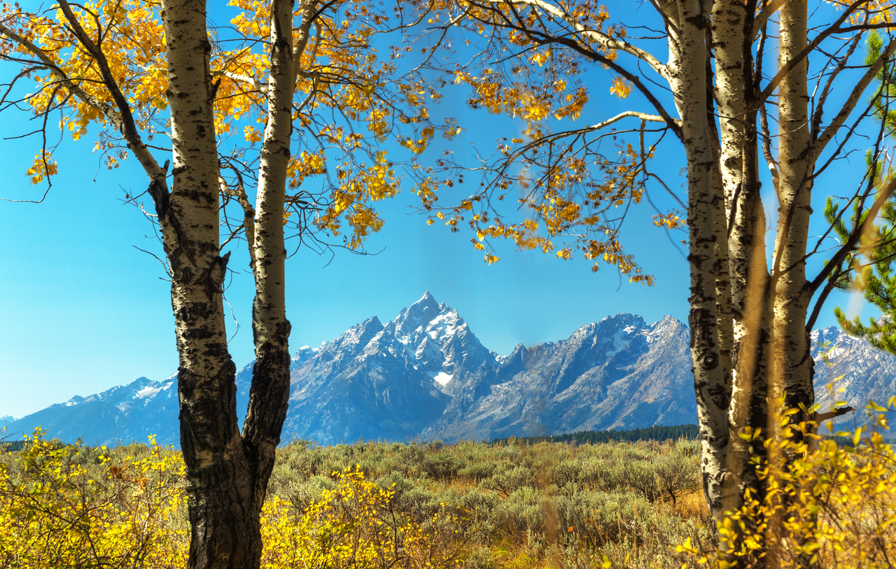 Fall colors and the Teton Mountains