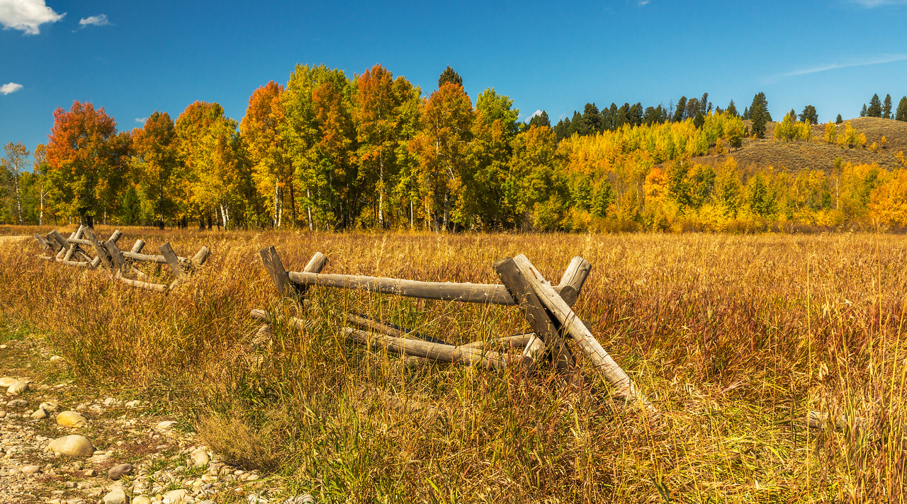 Fall colors in the Teton National Park