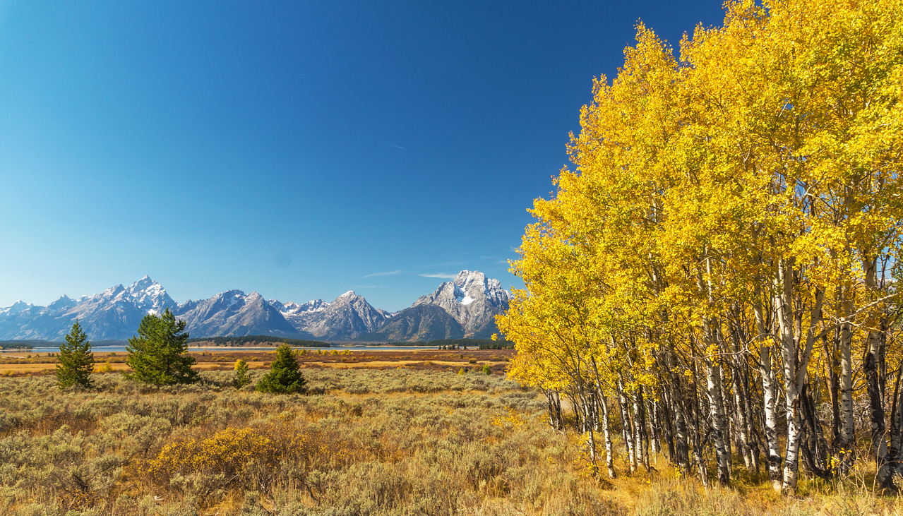 Teton Mountains and fall colors