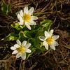 tetons flower-6061