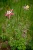 tetons flower-5887