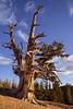 cedar breaks-5740