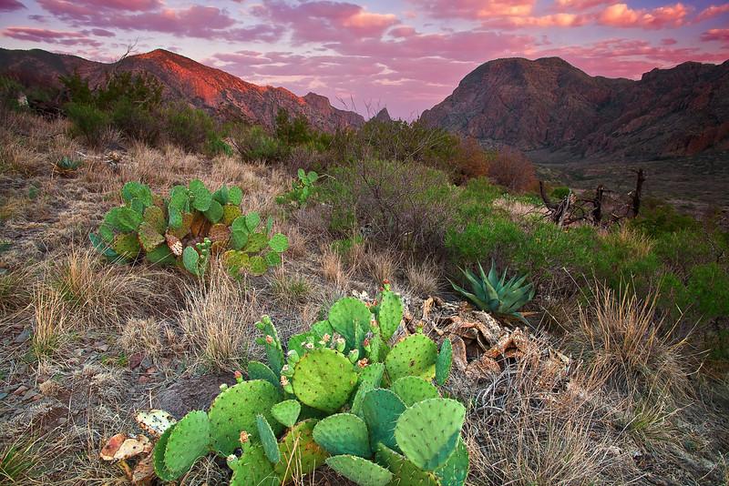 Texas, Big Bend National Park, Chisos Basin, Havard agave, Sunrise, Landscape, 德克萨斯, 大弯曲国家公园, 日出, 风景