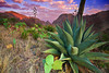 Texas, Big Bend National Park, Chisos Basin, Havard agave, Sunrise, Landscape, 德克萨斯, 大弯曲国家公园, 日出, 风景