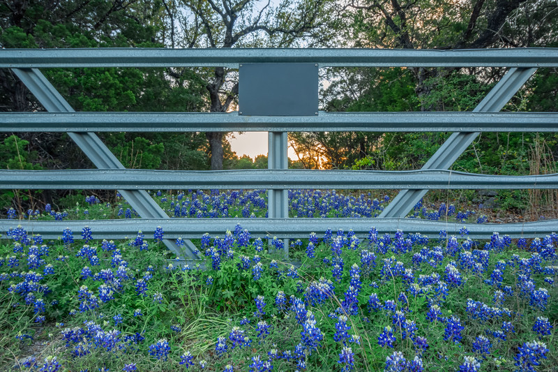 Every Texan's Dream.
