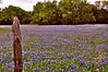 Field Of Blue
