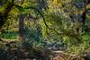 Dry Creek In Fall