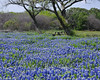 Bluebonnet Picknic