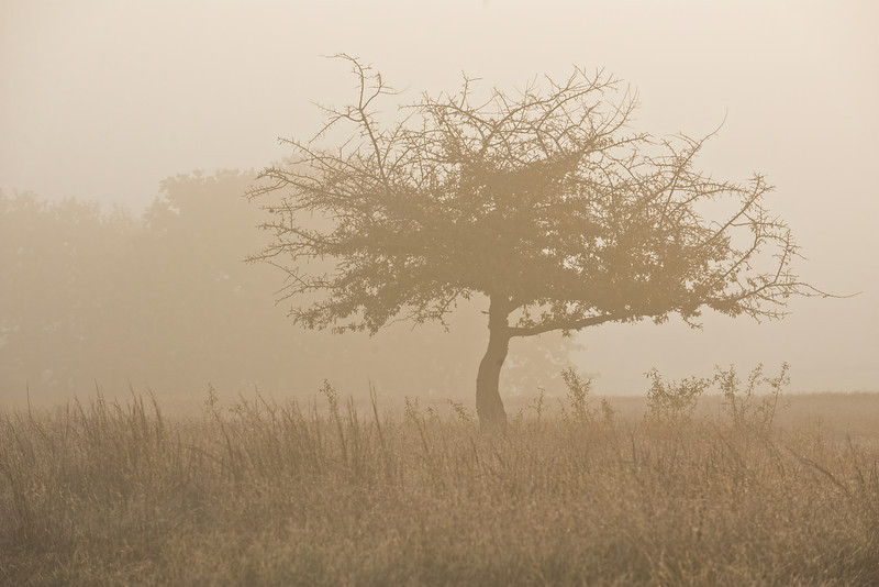 'Old Sam's Tree'