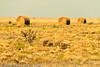 A landscape taken Oct. 31, 2011 near Muleshoe, TX.