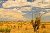 A landscape taken July 20, 2011 near Pine Springs, TX.
