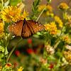 Queen, Garner State Park