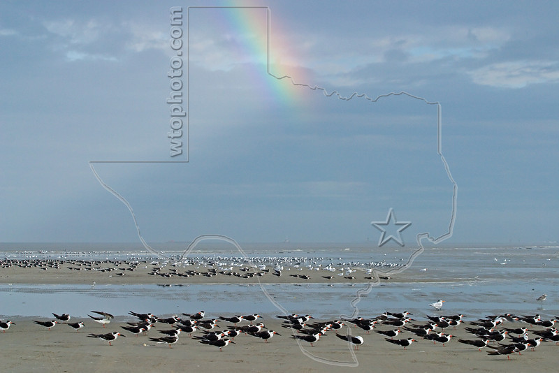 Shorebirds and Rainbow,<br /> East Beach, Galveston, Texas