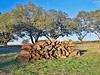 Mesquite Wood for Barbeque,<br /> Nordheim, Texas