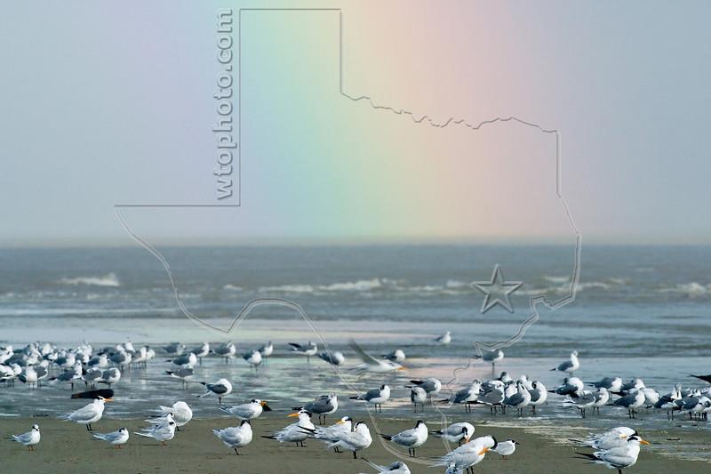 Shore Birds and Rainbow,<br /> East Beach, Galveston, Texas