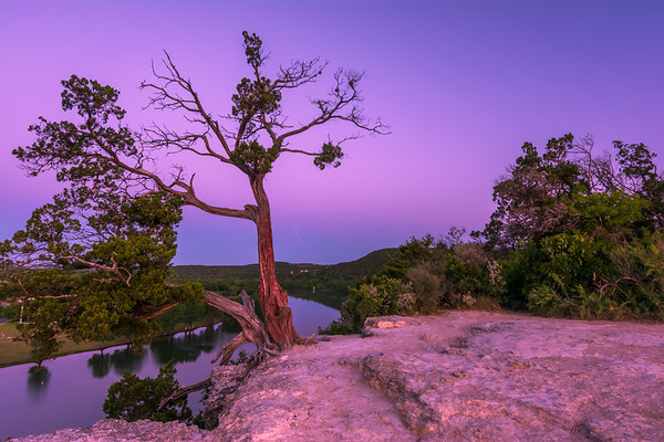 Lone Cypress meets The Violet Crown.