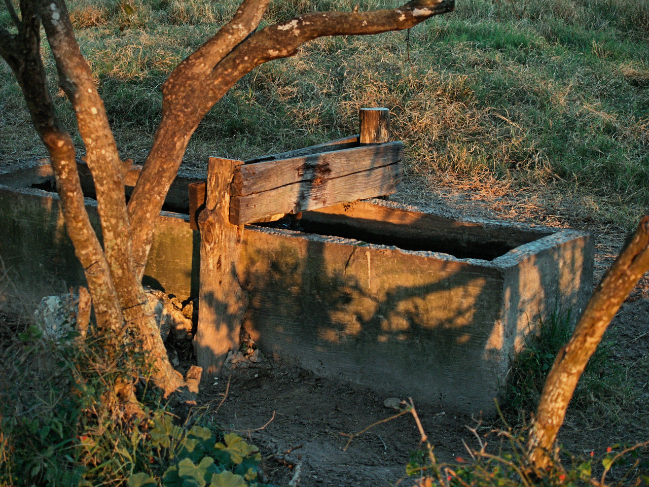 OLYMPUS DIGITAL CAMERA--Water trough in the heifer pasture.