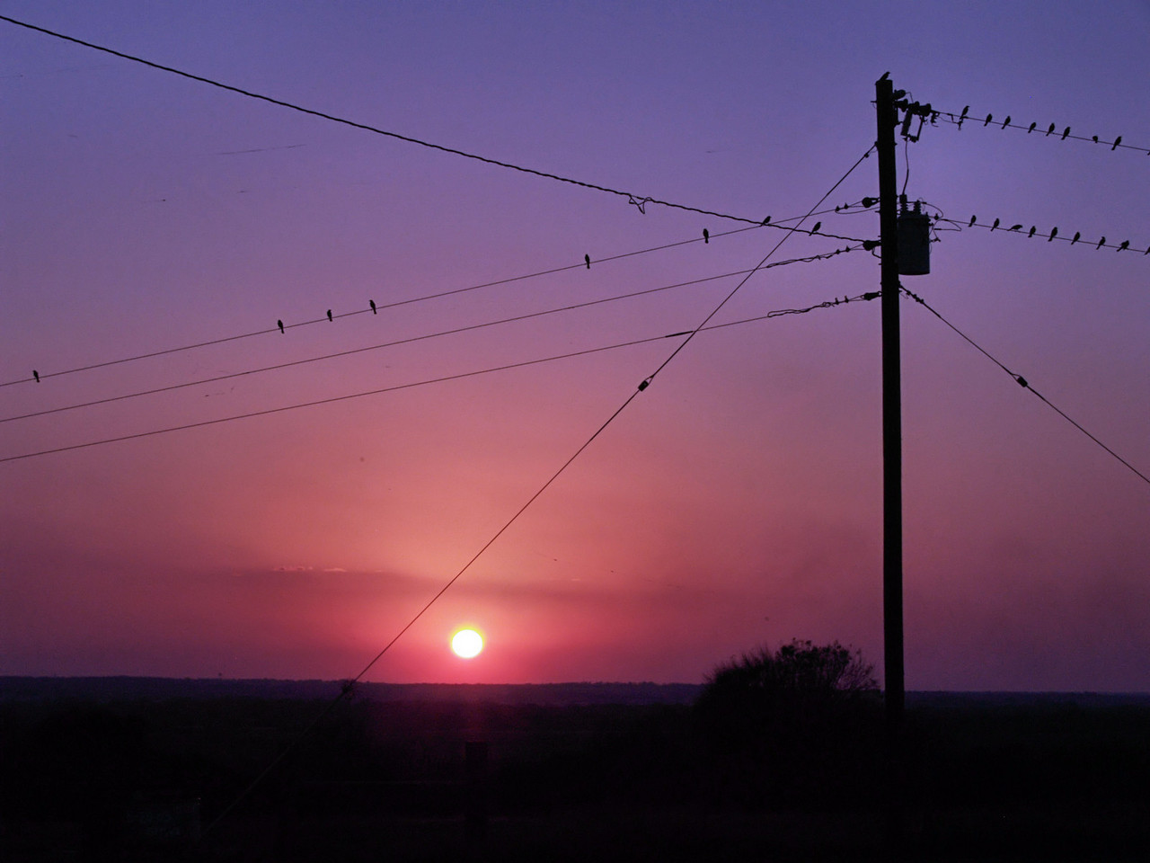 OLYMPUS DIGITAL CAMERA--The birds settled down prior to the sun setting.