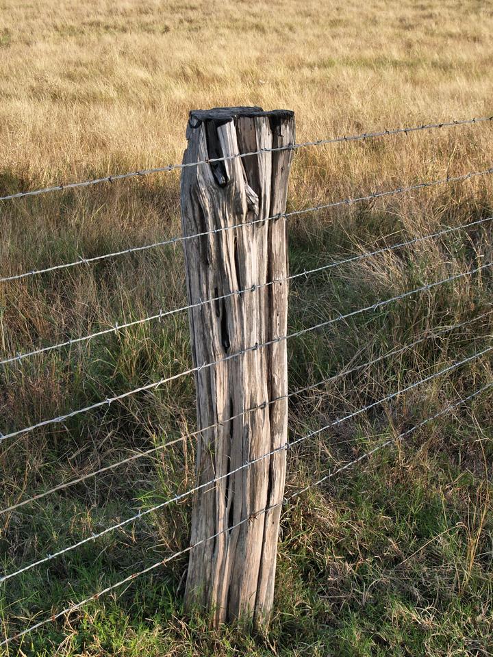 OLYMPUS DIGITAL CAMERA--Fence post in the lane.