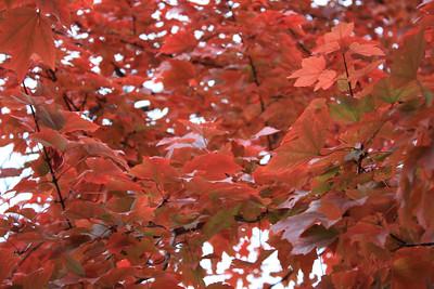 Thatcher Woods Fall 2008