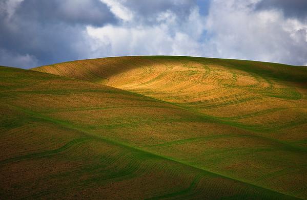 The American Farmland of the Palouse