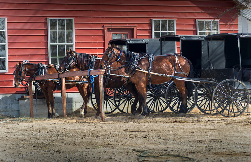 Ethridge TN - horses waiting for their owners while they work