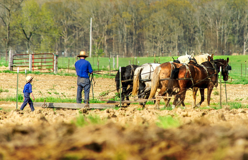 Spring Cultivating