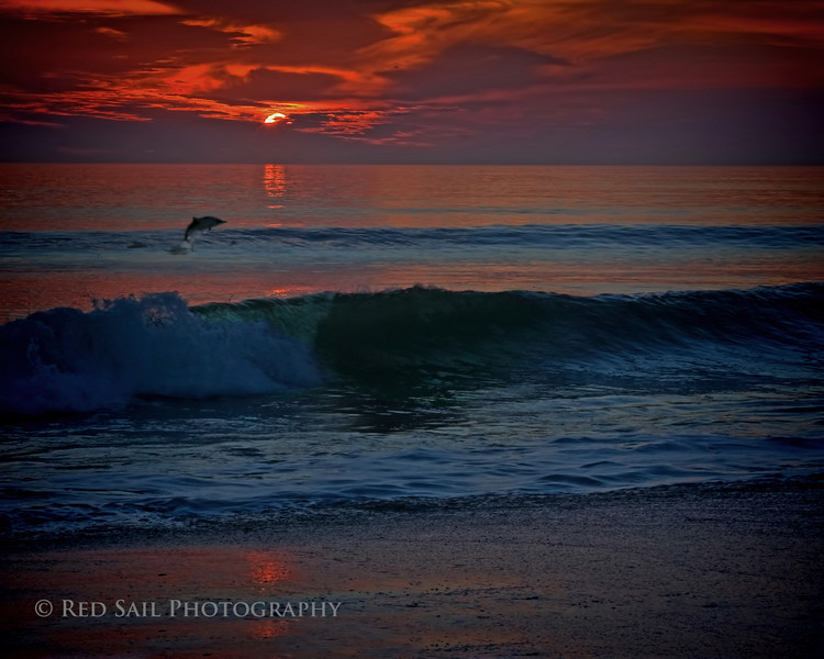 """Celebrating A New Day""...... Porpoise played in the surf as the sun cast new light on the beach. Atlantic Beach, Florida."