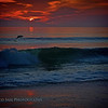 """""""Celebrating A New Day""""...... Porpoise played in the surf as the sun cast new light on the beach. Atlantic Beach, Florida."""