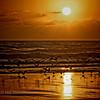 """""""Morning Gulls"""""""