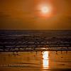 """Morning Gulls 2"" Image taken near the Jacksonville Beach Pier, Florida."