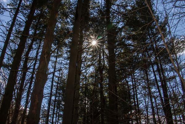 The Bruckner Nature Preserve 2-21-2014