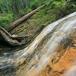 Gold Cascade - Redwood Country Central California Coast