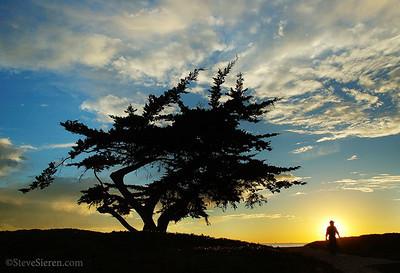 Cypress Man Silhouette Carpinteria State Beach