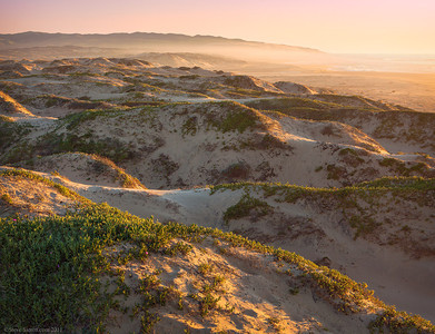 Dunes Preserve - Central California Coast  This nature preserve features towering dunes 550 ft tall, which are the tallest on the west coast.  Springtime offers beautiful wildflowers such as evening primrose and sand verbuena.  This place is home to the snowy plover during it's nesting season so part of it's access is closed through part of the year.