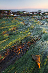 Green Hair Factory  Goleta, California