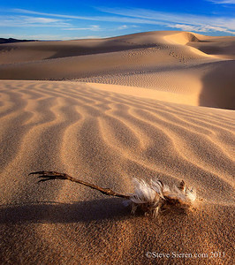 Ocean Dunes in the Central Coast of California
