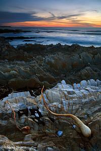 Seaweed Sunset  San Luis Obispo County, CA