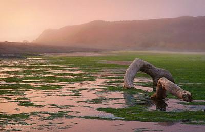 San Simeon Sea Mist