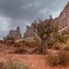 Utah Juniper - Arches National Park - Utah