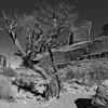 Juniper Park Avenue - Arches National Park - Utah<br /> 12 image multi-row panorama, Nodal Ninja 3,<br /> PT gui stitching, Photoshop