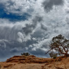 Pinyon Pine, Wild Sky - Canyonlands National Park 2011